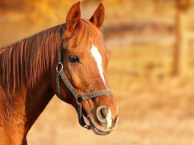 ルグゼバイブの馬プラセンタの副作用