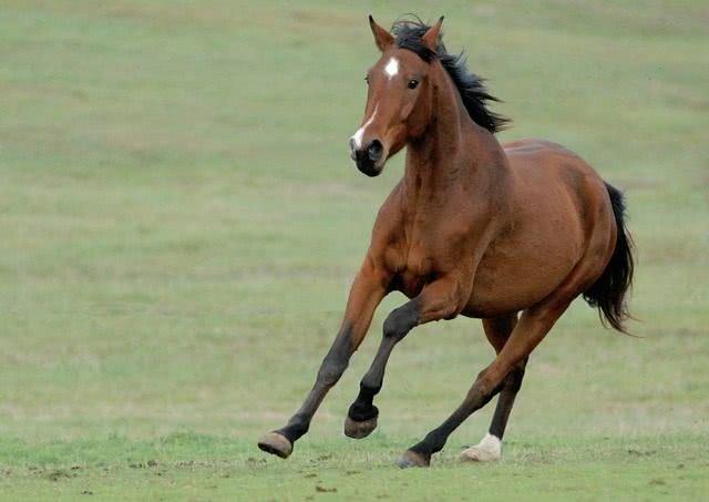 ルグゼバイブはパントガールに馬プラセンタ・コロストラムを追加した育毛サプリメント