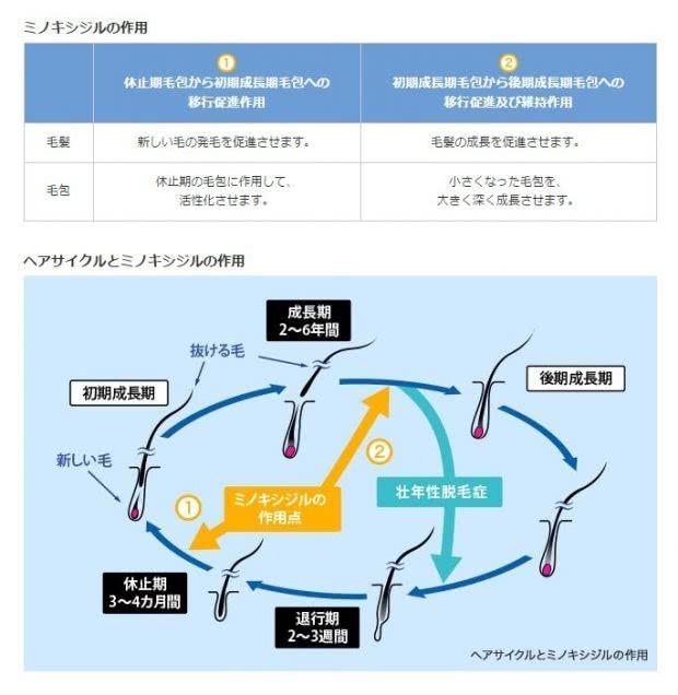 ミノキシジルの効果の作用機序・ヘアサイクルの正常化