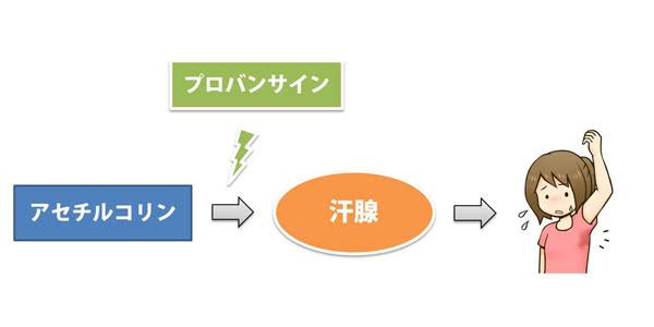 プロバンサインの多汗症への効果・作用機序(抗コリン作用)